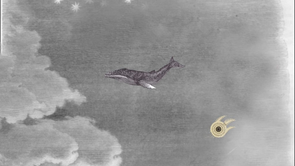 WWW {the whale who wasn't}