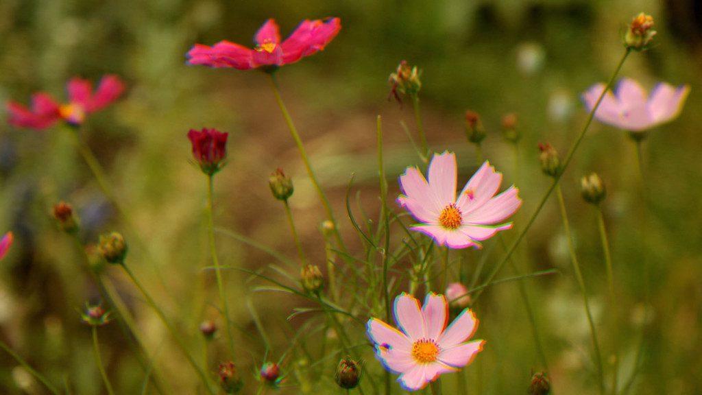 Russian Flowers
