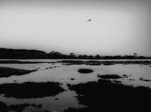Marshy Place Across