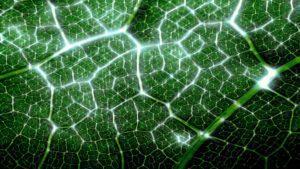Fotosintetico